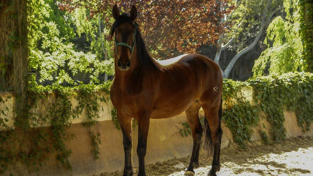 Catalan Coast & Spanish Horses 11