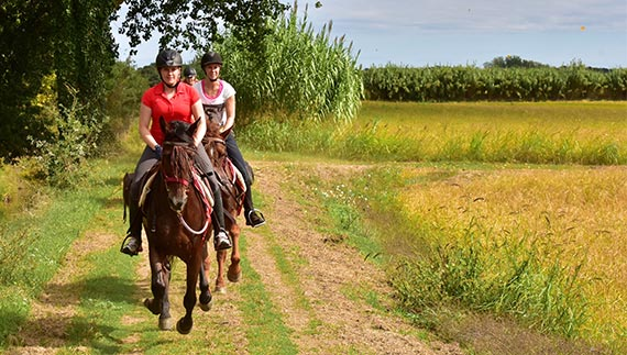 Canter gallop fields forest meadows Spain