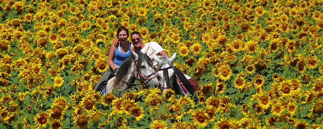 Trail riding in Catalonia sunflowers