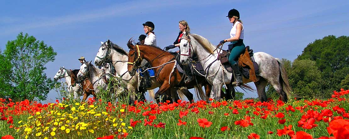 Enjoy Catalonian landscape on horseback
