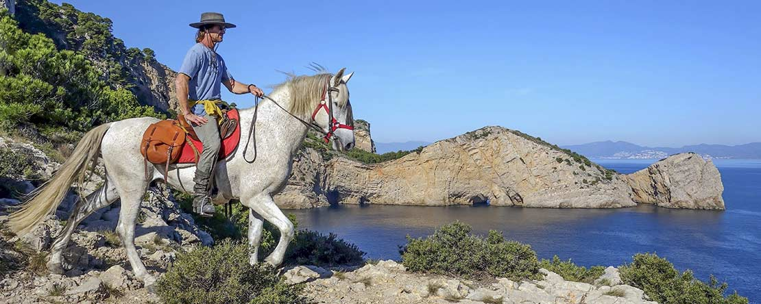 Andalusian horse Spanish wild coast