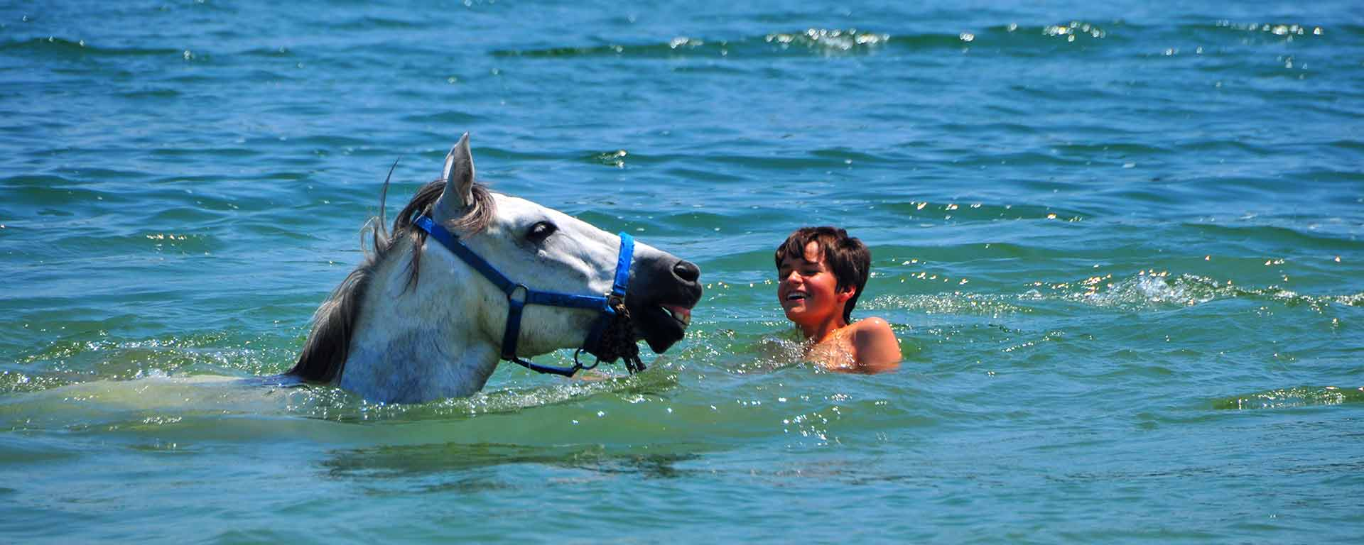 Catalonia on horseback – Swimming with horses