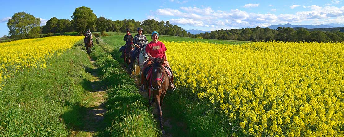 Beautiful flowers on horseback Spain
