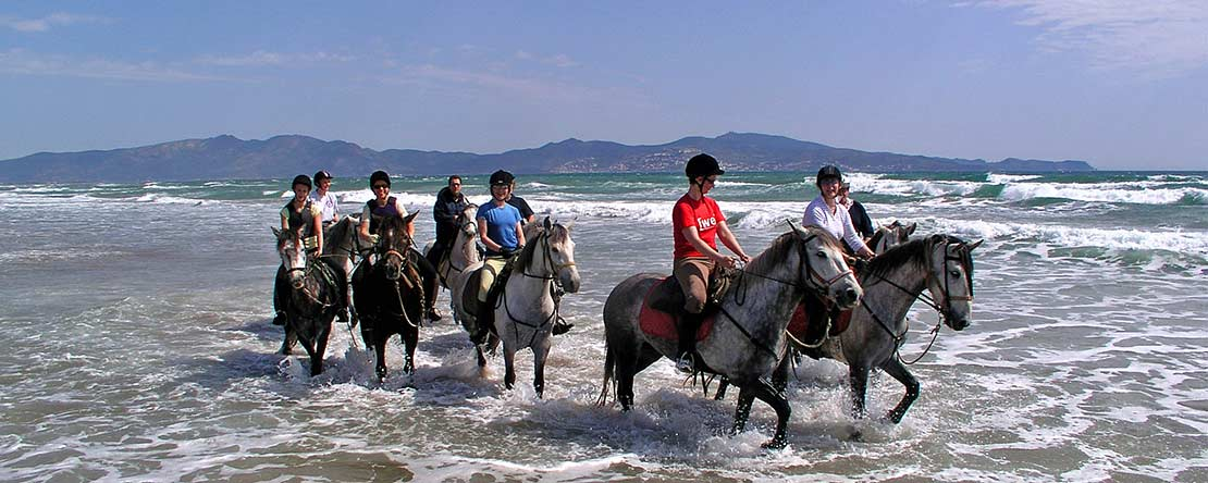 Spanish horses amazing holiday