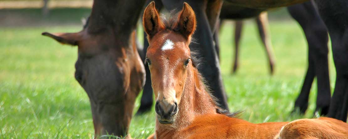Andalusian foal horse riding holiday Spain