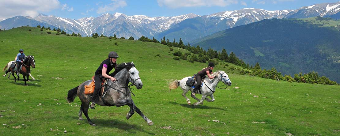 Gallop in Pyrenees