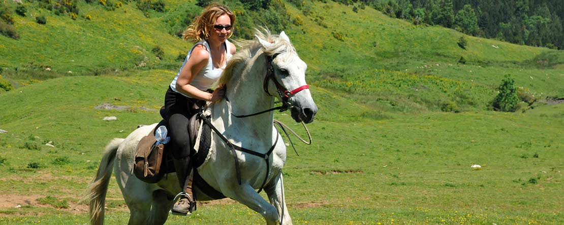 Speedy riding Andalusian horses