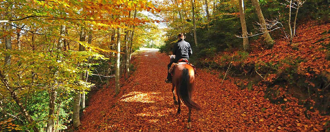 Trail ride autumn Catalonia