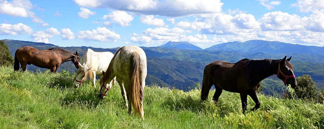 Bandit Trail - Panorama-Trails