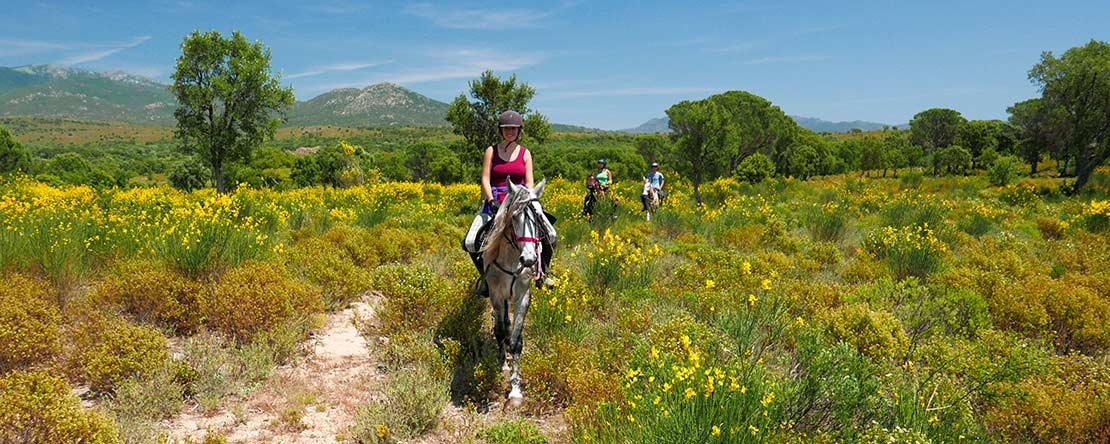 Discover northern Spain on Andalusian horses