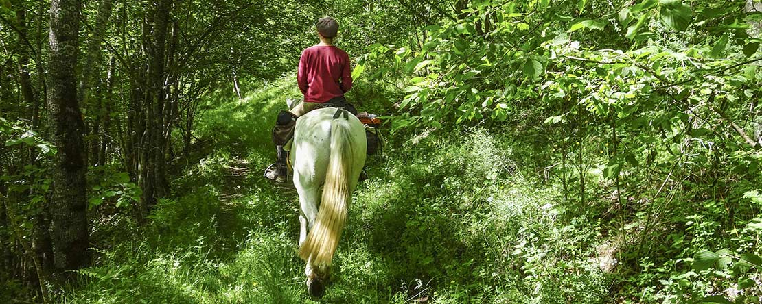 Discover green northern Spain on horseback