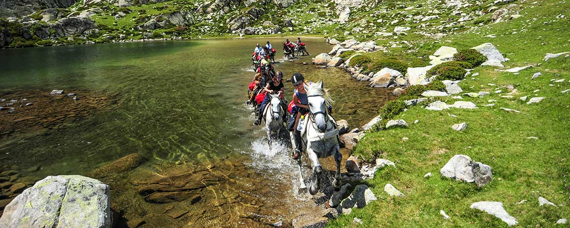 Cool mountain lake Andalusian horse
