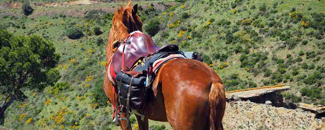 unforgettable trail ride adventure holidays catalonia